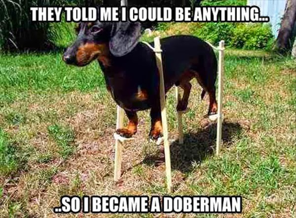funny pictures funny captions dogs addition