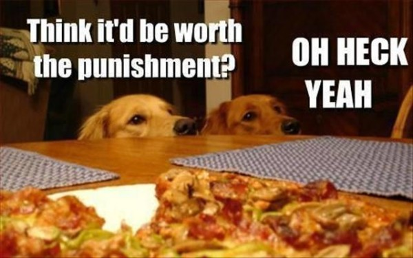 hilarious photos with captions
