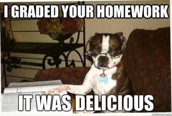 hilarious pictures with captions