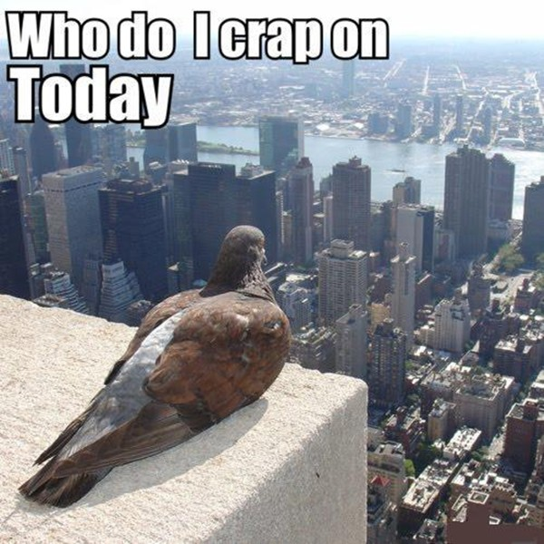 super funny pictures with captions