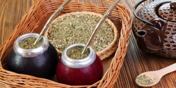 Yerba mate best for weight loss tea