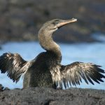 12 Flightless Birds You Probably Didn't Know About
