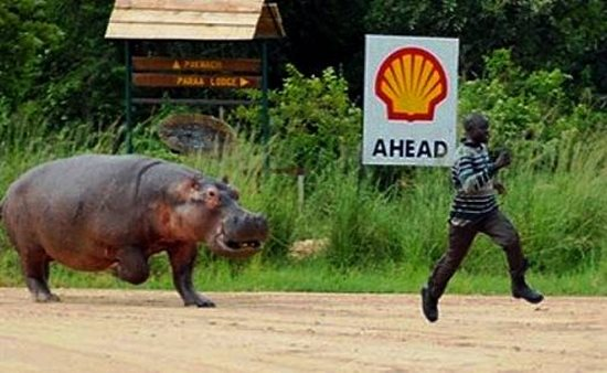 this-man-who-just-realized-that-hippos-can-run-faster-than-his-expectations