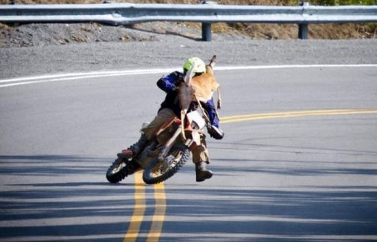 this-motorcyclist-who-has-just-realized-that-this-isnt-going-to-end-well