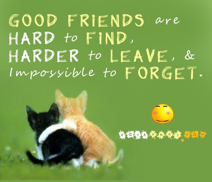 friends forever quotes and - photo #25