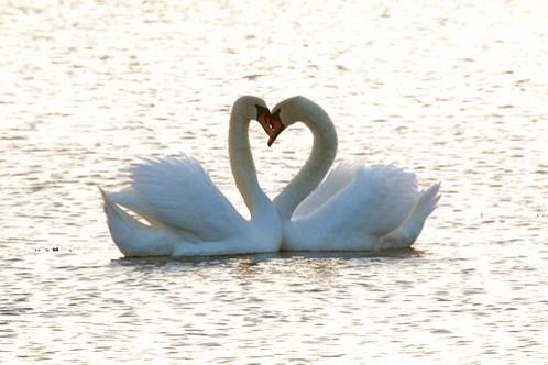 heart-love-pics