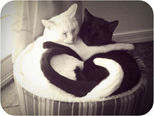 heart-love-pictures