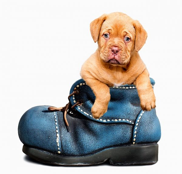 adroble puppy in boot