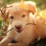 Cutest Puppies of All Time – 25 Cute Puppy Pictures