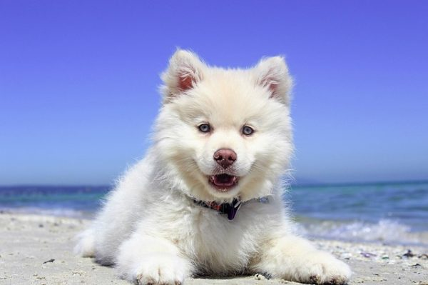 cute puppy on the beach