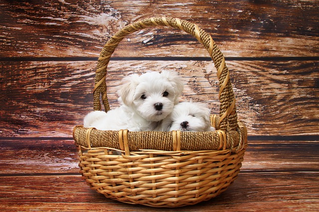 cutest dogs in the basket