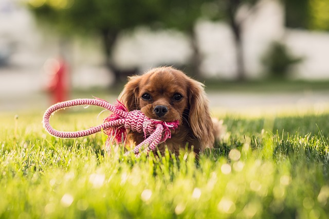 Cutest Puppies of All Time - 25 Cute Puppy Pictures