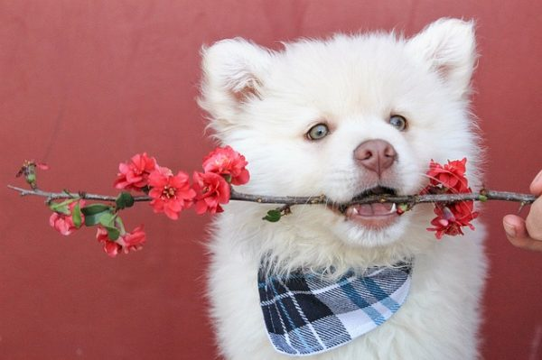 pictures of cutest puppies of all time