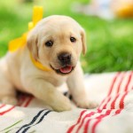 The 50 Cutest Puppy Pictures Of All Time